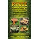 Ryzce v lese, v kuchyni a s léčivými účinky (autor Socha Radomír)